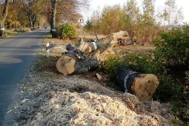 Никакого свинства. Сельские дороги очищают от многолетних зарослей