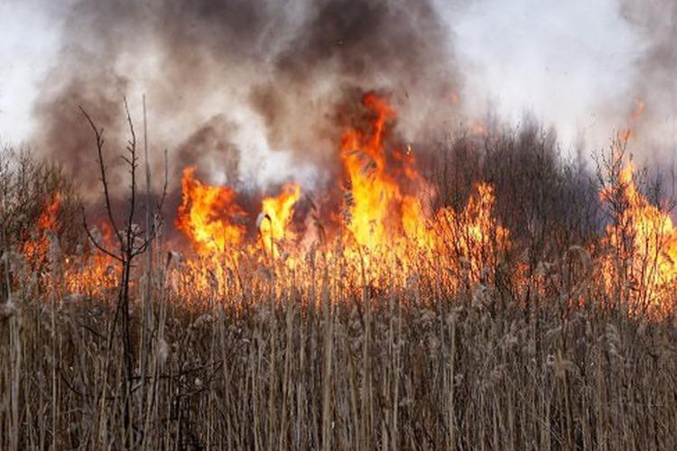 Помочь в выявлении очагов возгорания может каждый