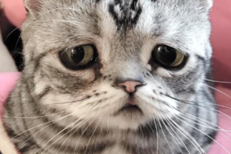 Найден кот с самым грустным в мире взглядом. Видео