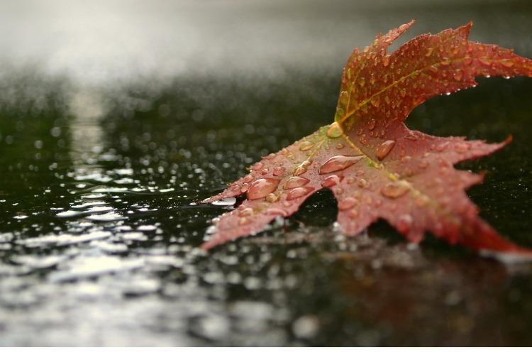 Погода в Балакове 23 сентября
