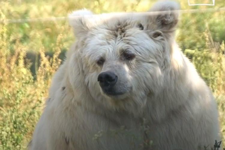 Измученные рабством медведи наконец-то обрели свободу. Видео