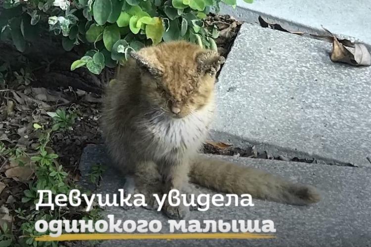 Спасатели подарили жизнь котенку, попавшему в теплотрассу