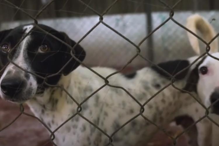 Индийский бизнесмен отказался от роскоши, чтобы помогать бедным животным. Видео