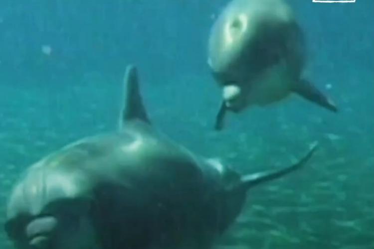 Дельфины страдают от содержания в неволе. Видео