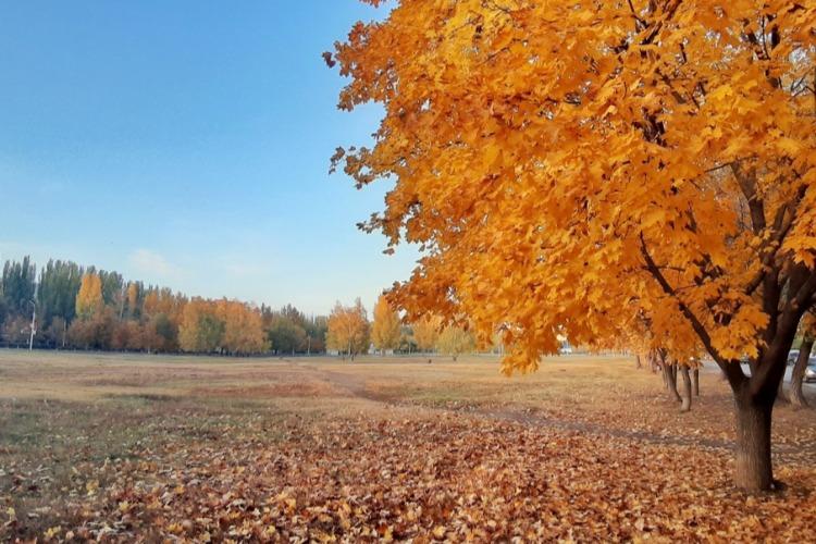 Погода в Балакове 9 ноября