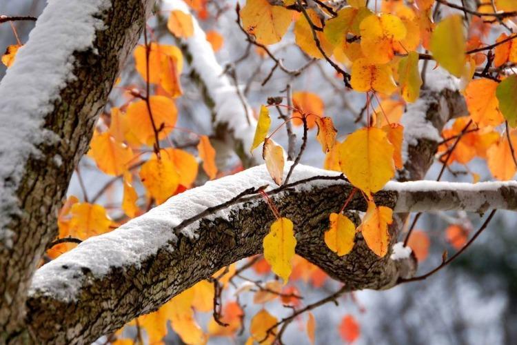 На этой неделе нас ждет похолодание и снег