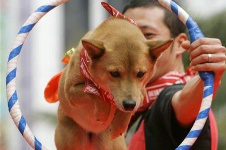 Цирк собачий