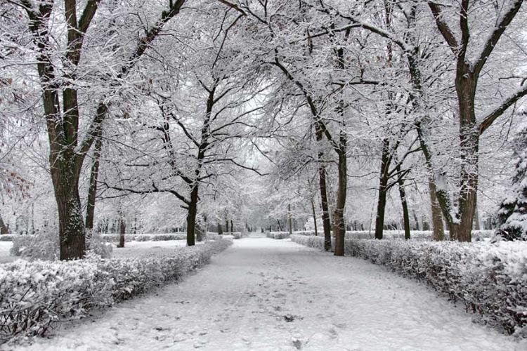 Снег, гололед или дождь? Какую погоду нам ждать на этой неделе