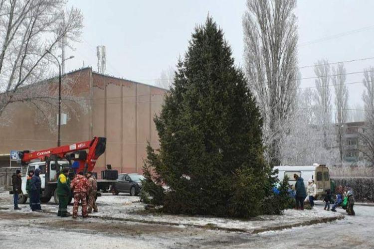 Спиленную в Дзержинском ель-красавицу установили у кинотеатра Россия