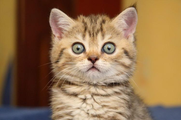 В Балакове жильцы сняли кота, сидевшего 2 дня на дереве. Видео