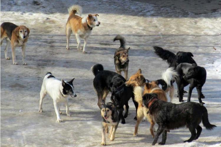 И вновь об агрессивных собачьих сворах