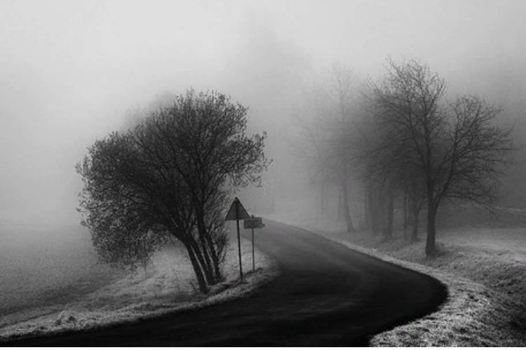 О дорожных ежиках в тумане
