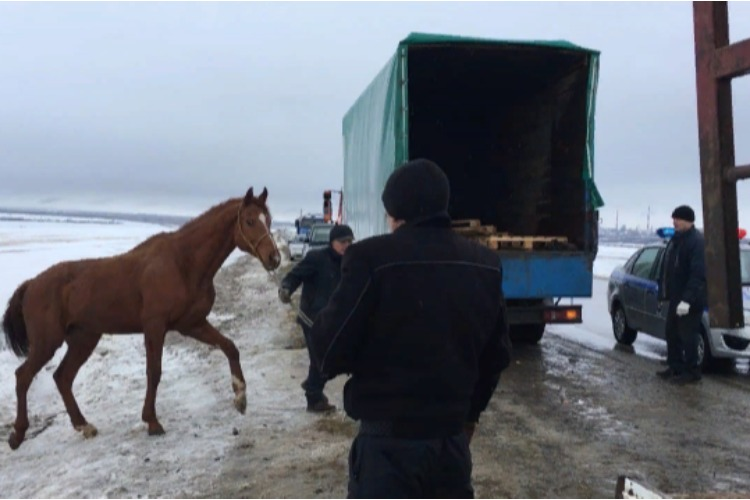 Лошадей, ставших жертвами ДТП, спасли всем миром