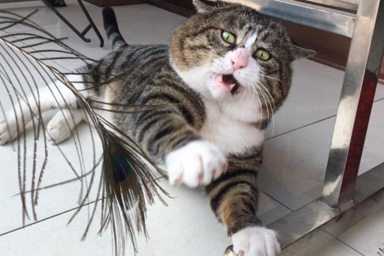 Ай Фэй - самый эмоциональный кот в мире. Видео