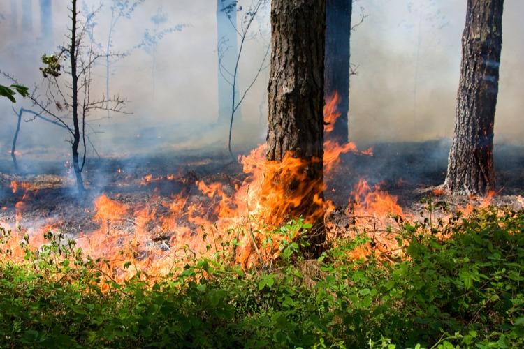В Саратовской области начинается пожароопасный сезон