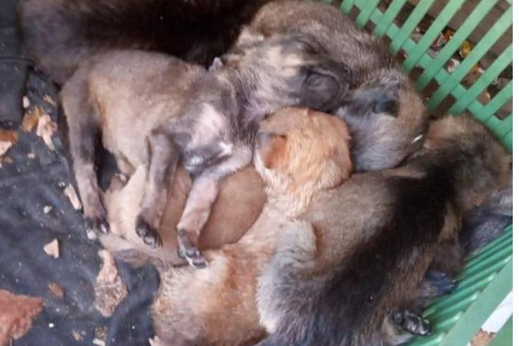 Нашли 7 щенков в мусорном баке. Видео