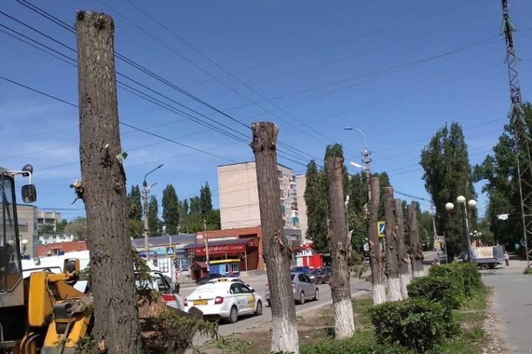 Жители Балакова встали грудью на защиту тополей. Видео