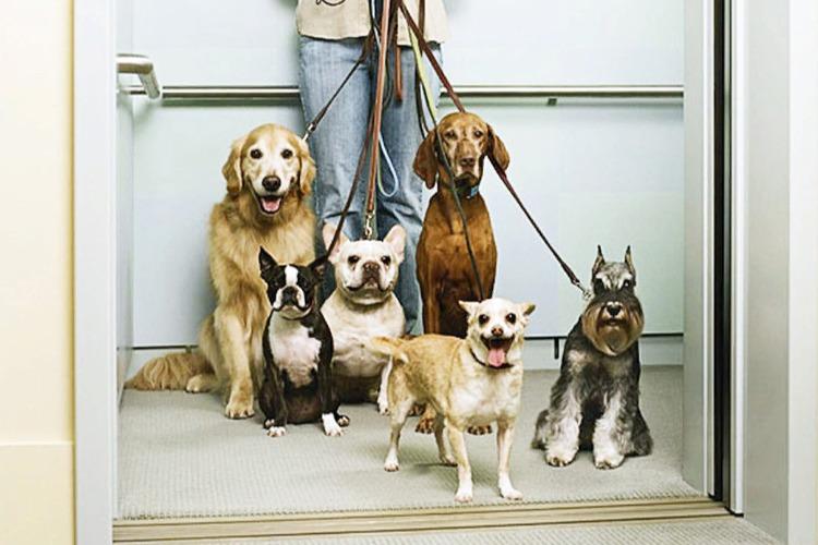 Лифтовые страдания или Фонд капремонта как собака на сене