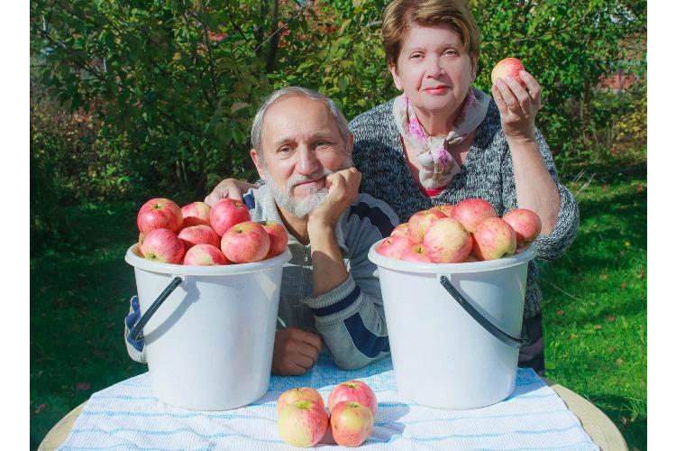Теперь и с яблоками. Полиция снова гоняет бабушек-торговок