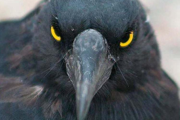 Птицепад в Балакове: свидетели, версии и последующие события