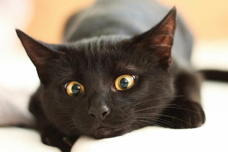 Зооволонтеры попросили не пристраивать черных котят и щенят до 31 октября. Почему?