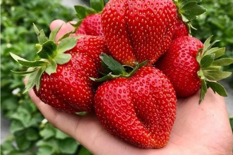 Уникальная выставка-продажа растений интенсивного плодоношения теперь в Балаково!