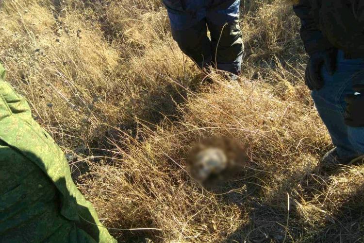 Под Балаковом сельчанин нашел кости человека в поле. Неподалеку найдена женская одежда