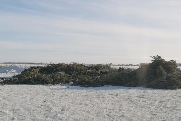 Новогодние ёлки на пустыре за 21 микрорайоном утилизируют после праздников