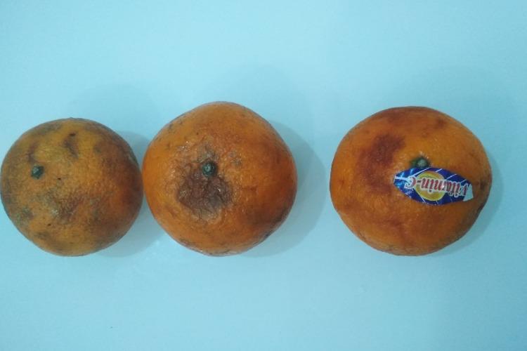 В школе под Балаковом детям раздали несвежие мандарины