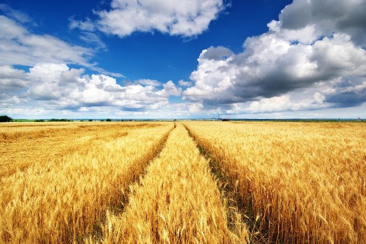 Средняя зарплата балаковских аграриев в 2020 г составила 29200 рублей