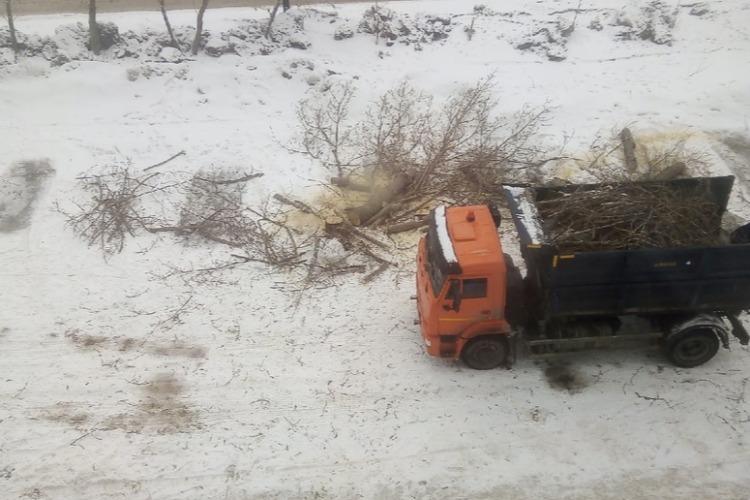 Балаковцы бьют тревогу из-за сруба многолетних деревьев
