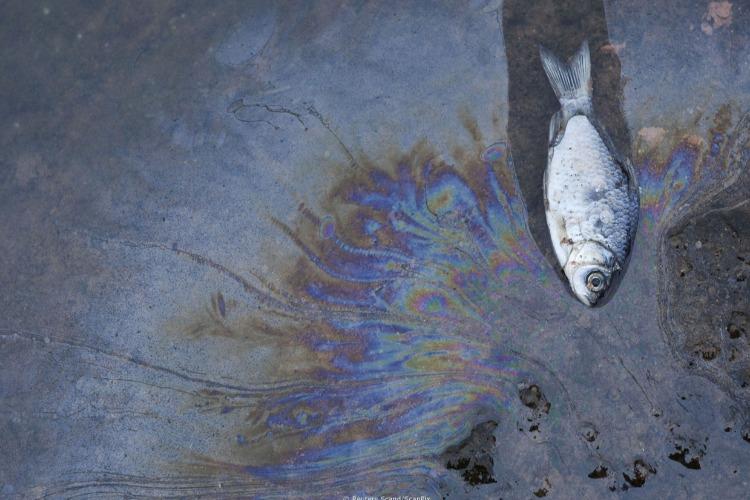 Есть мнение, что Саратовская ГЭС травила волжскую воду нефтепродуктами