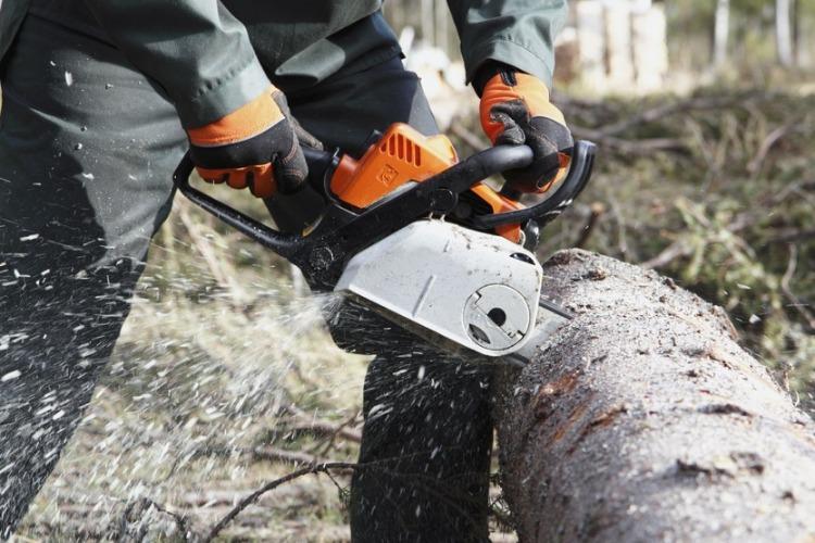 Павел Канатов не дал Т Плюс уничтожить 49 деревьев на Трнавской