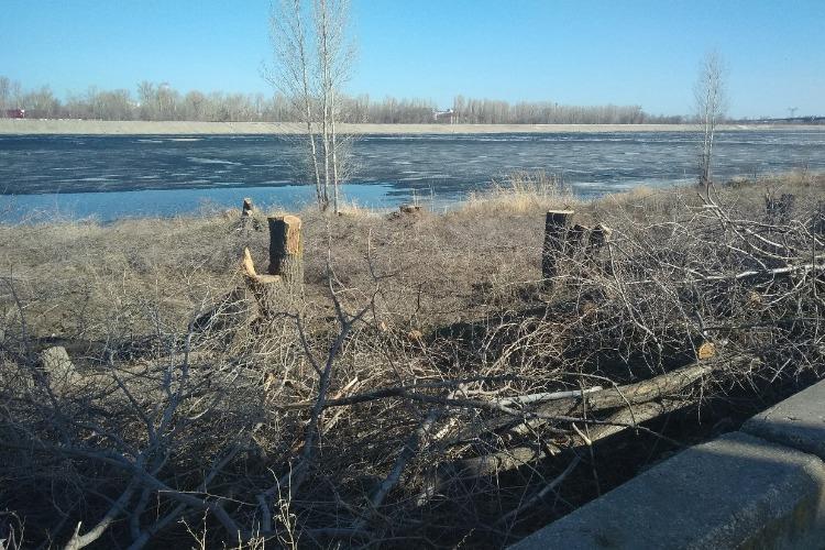 Надежду Познякову беспокоит вырубка деревьев на побережье Судоходного канала