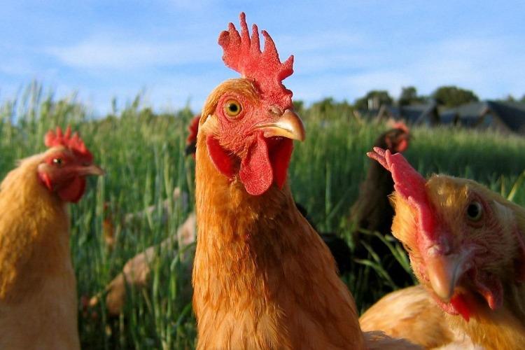 Цена на яйцо в Балакове установила новый рекорд