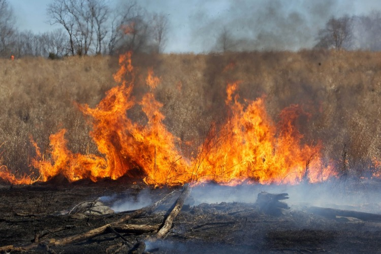 В Балакове и окрестностях горели тысячи квадратных метров сухой травы