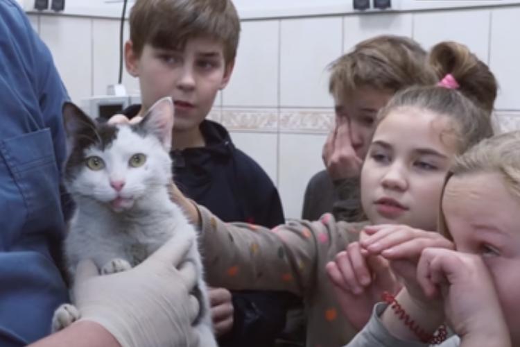 Школьники собрали деньги на операцию кошке, которую сбила машина. Видео