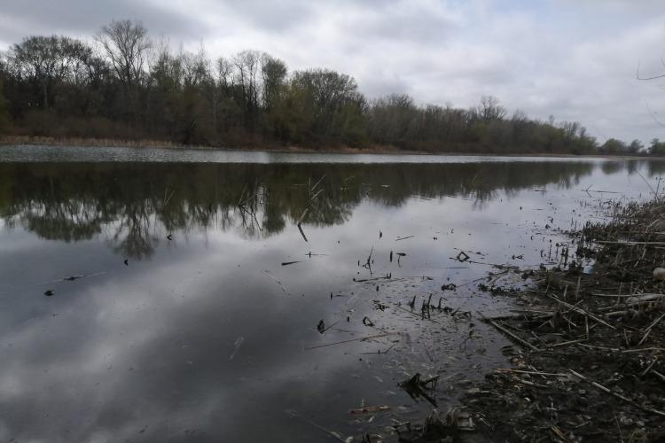На озере под Балаковом погибла вся рыба