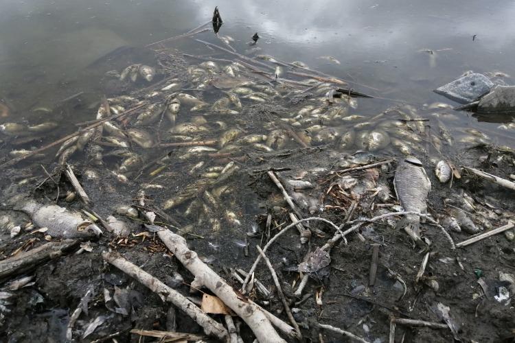 Рыбнадзор выясняет причины зимнего замора рыбы, но что это может изменить?