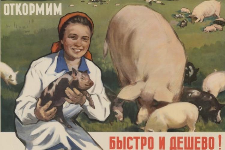 Листая подшивки газет Балакова. Свинячья слабость