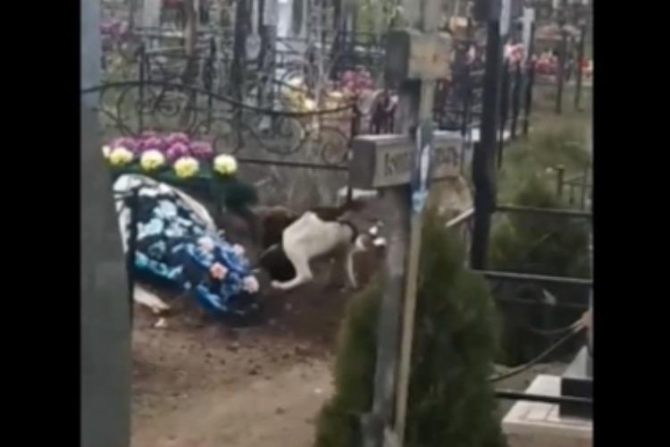 Собаки-некрофаги раскопали могилу на кладбище в Балаково