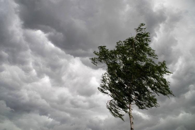 МЧС предупреждает об усилении ветра до штормовых отметок
