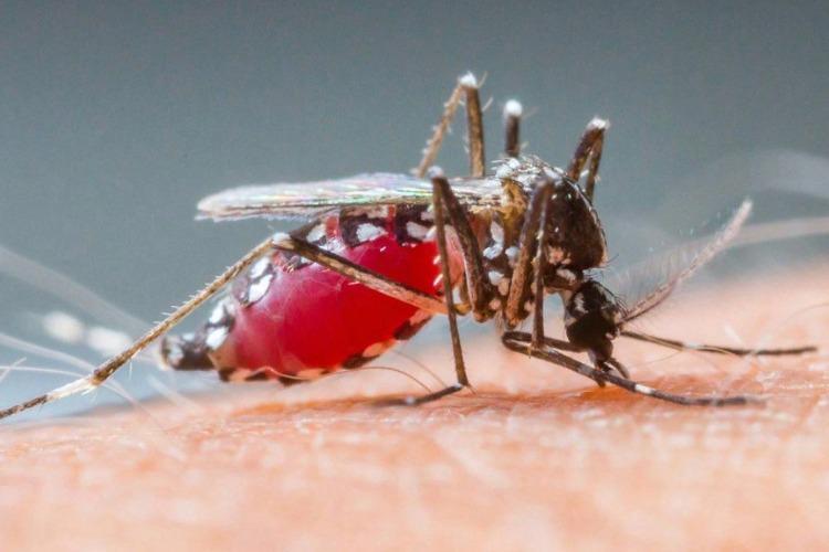 Опять у нас нашествие вампиров. Почему только стрекозы спасают балаковцев от комариного АДА