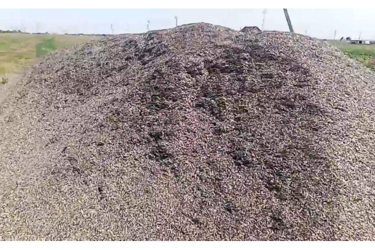 Неизвестные сбросили тонны лузги подсолнечника в Новонатальино