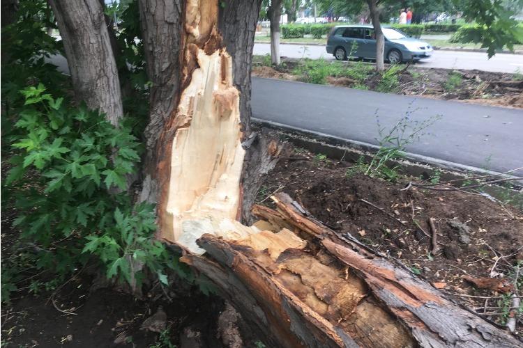 Как в Балаково уплывали госномера и падали деревья после стихии и даже до нее
