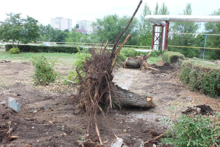 В сквере 8А микрорайона вырубили около 40 деревьев