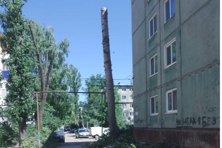 Что за добры молодцы варварски уничтожают деревья в Балаково?