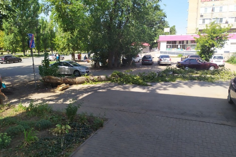 Коммунальщики третий день не могут убрать с дороги упавшее дерево