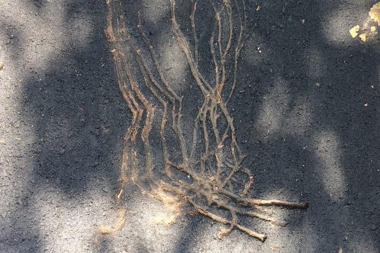 Горе-ремонтники снова закатали ветви деревьев в свежий асфальт