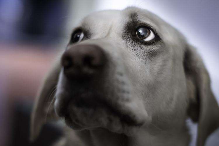 В Балаково очевидцы вытащили провалившуюся в колодец собаку